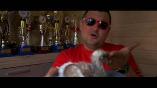 Magik Band - Leci gołąb leci (OFICJALNE VIDEO)2017