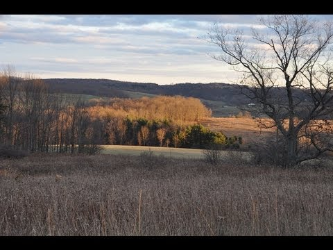 Hunt For Coyotes In Pa