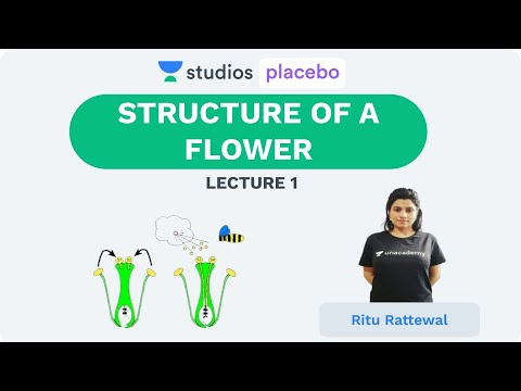 L1: Structure of a Flower  | Sexual Reproduction Plants  (Pre-Medical: NEET/AIIMS) | Ritu Rattewal