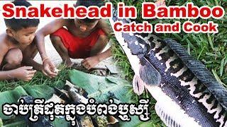ចាប់ត្រីដុតបំពង់ឬស្សី Catch and cook: Roasted Snakehead in Bamboo