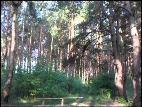 Приятные картинки леса