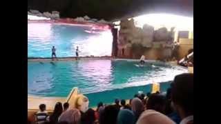 Atraksi lumba-lumba di Ancol