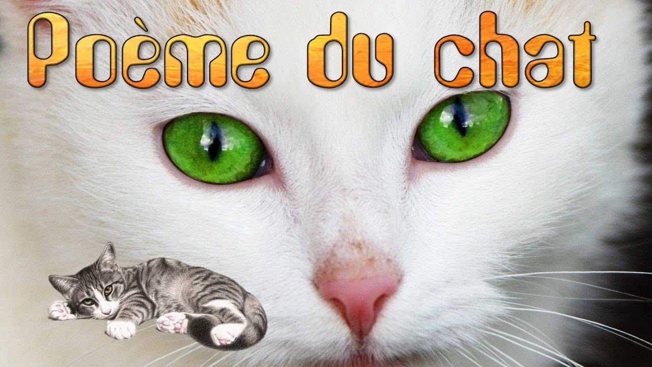 Chat d france