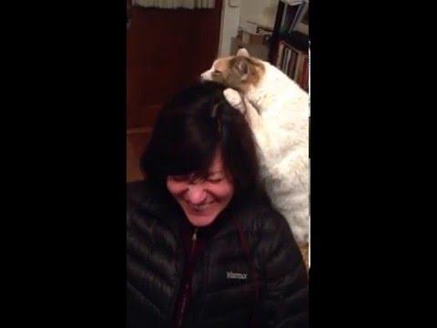 Cat Hairdresser in Training