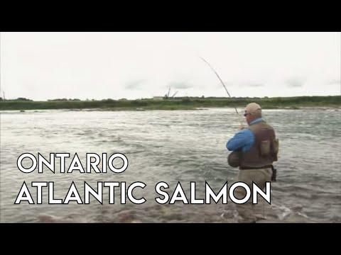 Atlantic Salmon | St. Marys River Ontario
