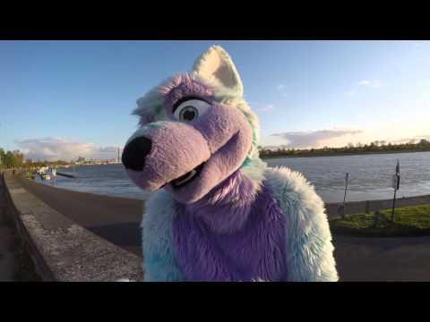 furry videos