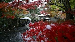 Tokyo Sees First November Snow in Over 50 Years