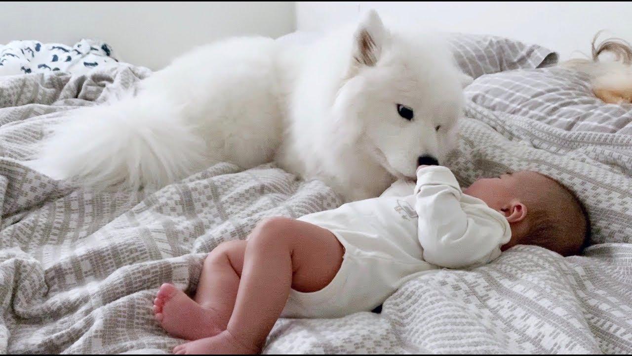 새로 태어난 동생을 너무나 사랑하는 강아지