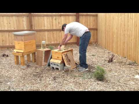 Jellison Bee Farms Colorado #2