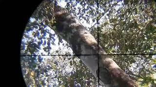 Berburu punai di tebing tinggi