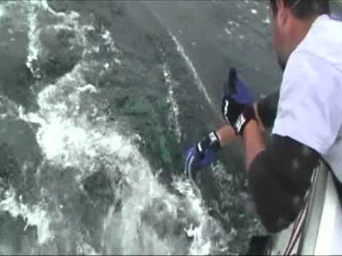 Crimson Tide Charters, the pursuit of Bluefin Tuna - YouTube - photo#29