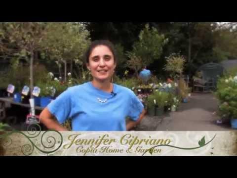 Tomato Festival Highlights From The Copia Garden Center