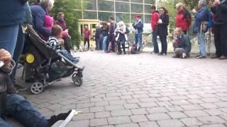 Angriff einer Kobra im zoo