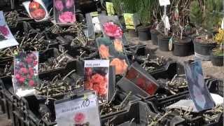 Wiosenne Targi Ogrodnicze w Strzelinie