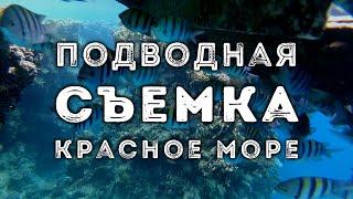 Подводная съемка Красное море Шарм эль Шейх Египет 2020