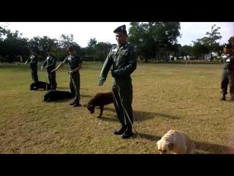 ตชด.22อุบล แอบชมการฝึกสุนัขสงคราม อีสานเสียงในฟิมล์