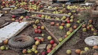 【台風19号】大変な泥の除去作業、出荷できないリンゴ 長野市津野地区