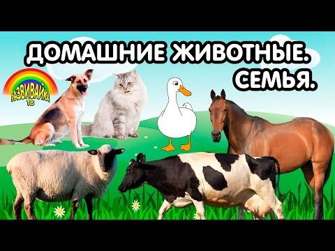 Мультики для самых маленьких. Домашние животные. Кто как называется? Детёныши. Семья.