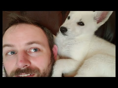 First Week With Our White German Shepherd Puppy
