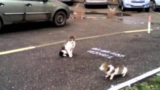 Сэкс котов