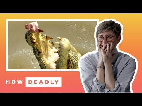 How Deadly Are Saltwater Crocodiles In Australia? | REACTION