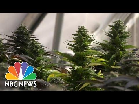 Medical Marijuana 'Refugees' Flock To Colorado | NBC Nightly News