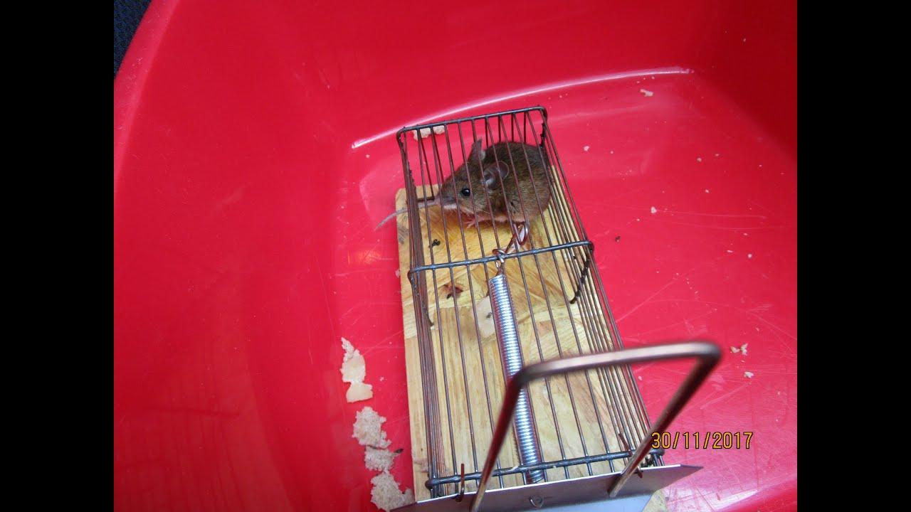 katzen von veganern und lebendfallen für mäuse  youtube