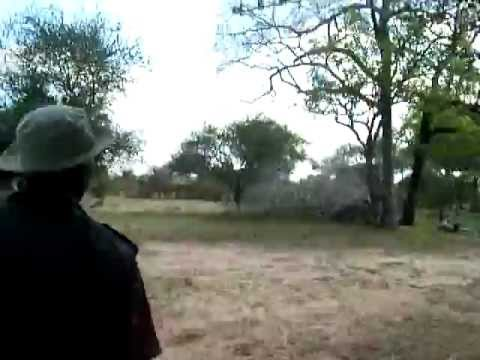 Game Walk Safari,  Selous Game Reserve