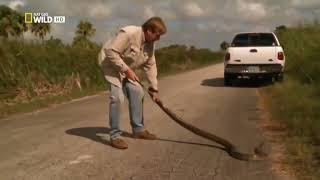 Ужас......Самая большая змея в мире Документальное кино