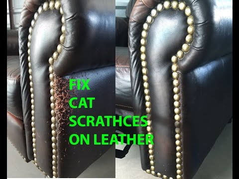 🐺 cat scratch leather repair easy and quick!