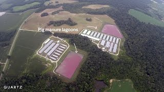 Hog farms make residents prisoners in their own homes