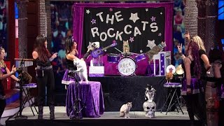 The Rock Cats Are Your New Favorite Band