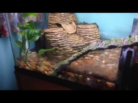 Custom Made Paludarium Setup for Tiger Salamander