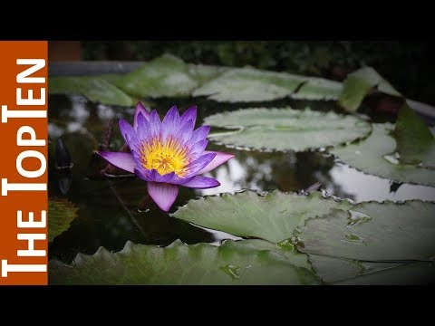 The Top Ten Most Beautiful Aquatic Plants In The World