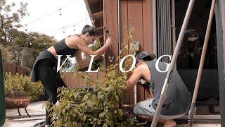 Weekly Vlog | Backyard Maintenance, Cruise Story Time, Fall Decor & More