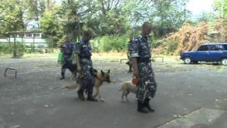 рабочие собаки Центра Кинологии МВД г.Луганска