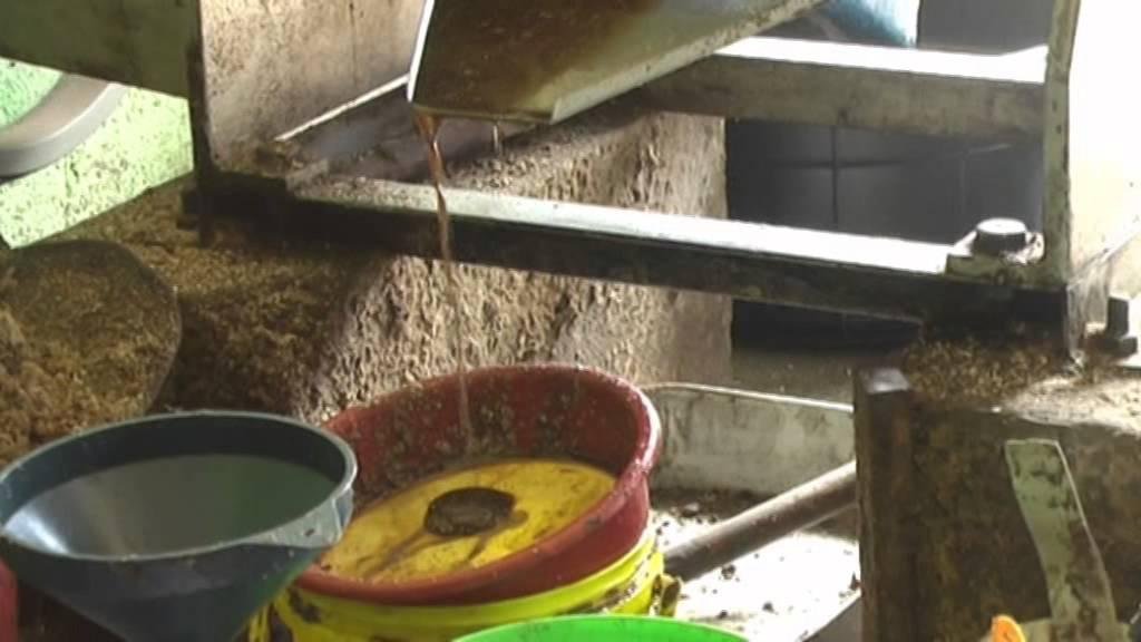 Palmöl Herstellung