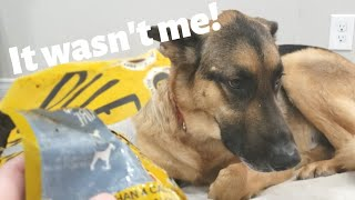 Life with a German Shepherd | Part 2 | Funny guilty dog