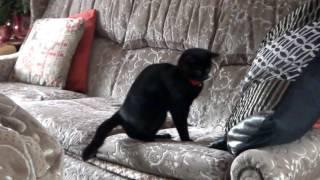 Забавное видео о котах, нарезка прикольных моментов,Funny videos about cats, cutting fun moments
