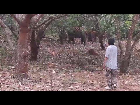 สารคดีช้างป่าทองผาภูมิ