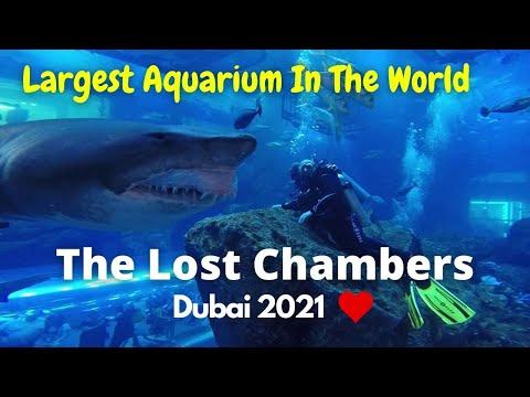 The Lost Chambers Aquarium Dubai | Atlantis Hotel Dubai 2021