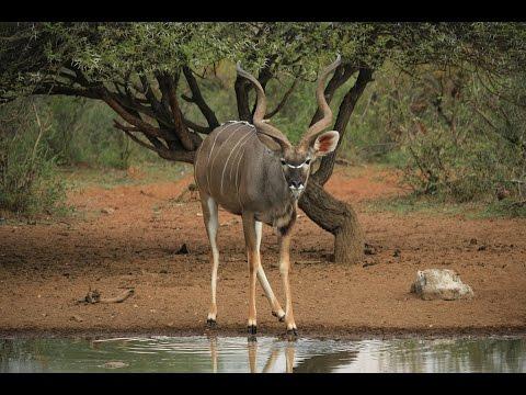 Bushmen Safaris - DVD 2015