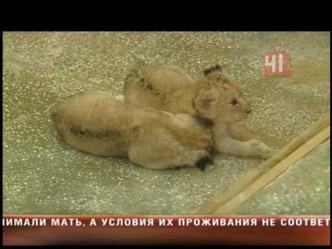 взрослые знакомства в львов