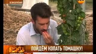 Чудо-овощ! Картошку скрестили с помидором