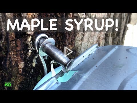 maple-syrup---new-england-views