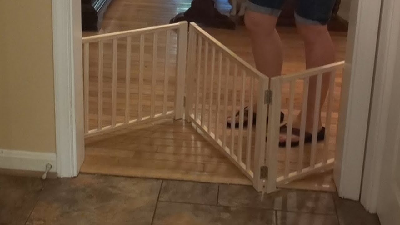 Four Paws Freestanding Walkover PET GATE Review 🐶 - YouTube