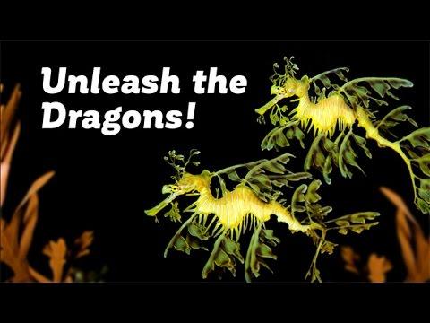 Unleash the Dragons! Secrets of Seadragon Biology