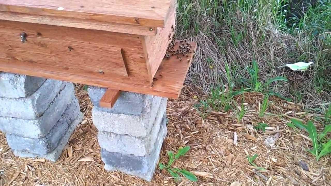 Cedar Top Bar Bee Hive - YouTube