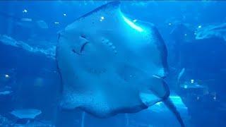 Aquarium connected with zoo ko…