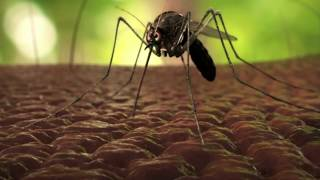 RUSSIA WARNED ITS CITIZENS: ZIKA VIRUS IS DISCOVERED IN TURKEY